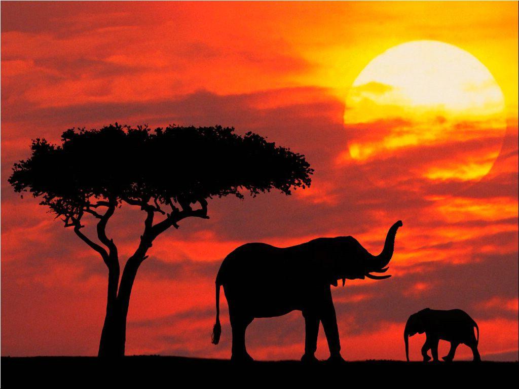 Vacances en Afrique du Sud