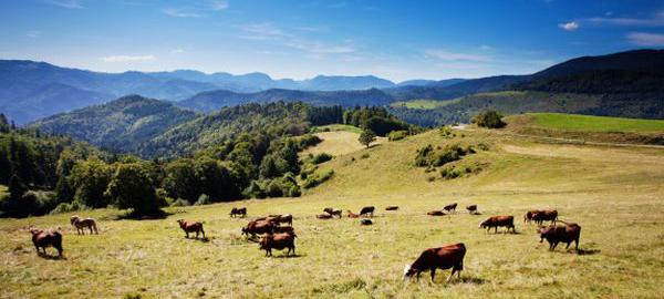 Découvrez le massif des Vosges durant vos vacances !