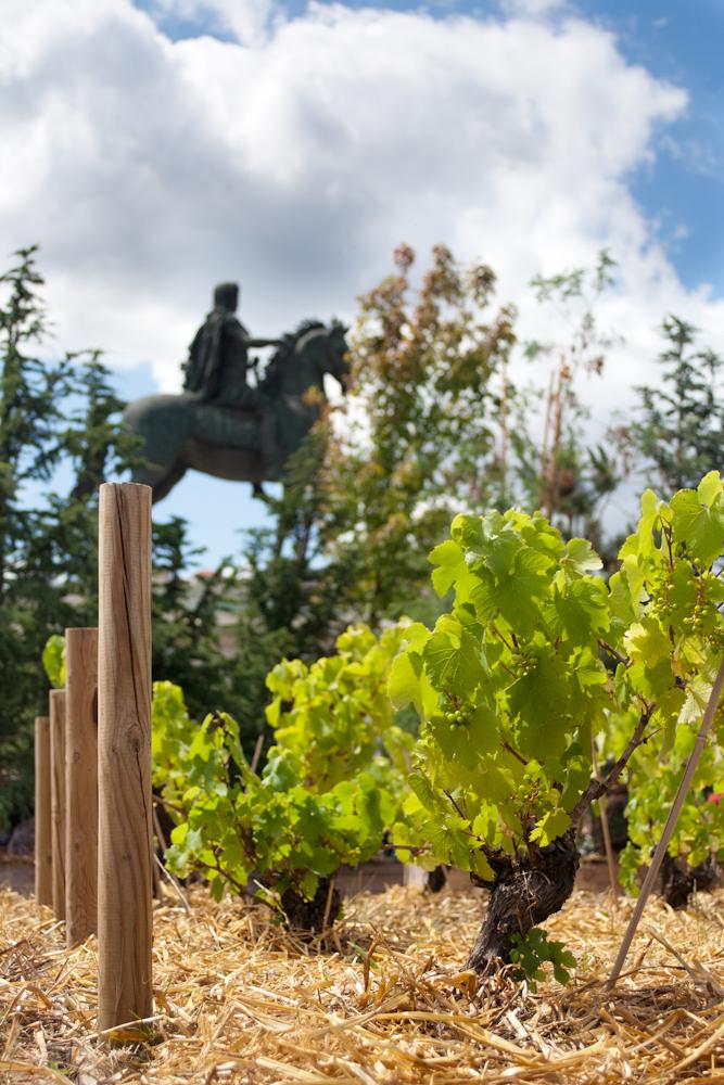 Vignes des Coteaux du Lyonnais