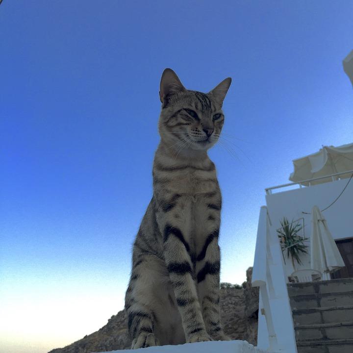 Faut-il emmener son chat en vacances ?