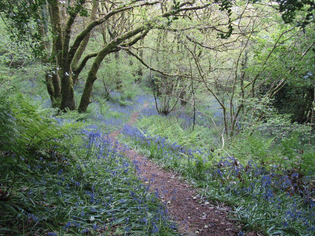 Un sentier de forêt bordé de fleurs